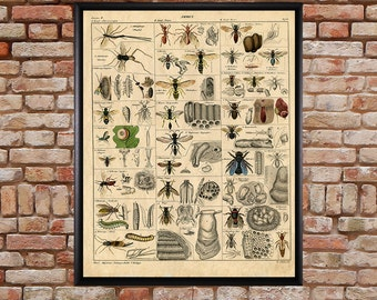 Vintage Insect Poster - Bee Print - Insects Decor - Bee Art - Wall Art Home Decor Fine Art Print #vi176