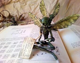 Mummified Fairy #1 / 7cm - 11cm / Dead Fairy /