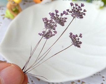 Real dried Pressed Flowers,Ammi Queen Anne's Lace Flowers with Stem Real Dried and Pressed Flowers