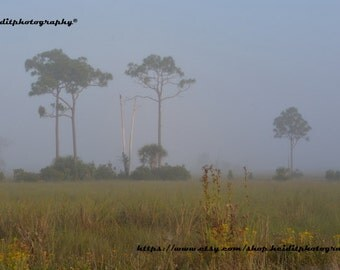 Everglades Morning * Florida Everglades * Photographic Art * Travel Art * Old Florida * Foggy Morning * Nature * All Natural Florida *