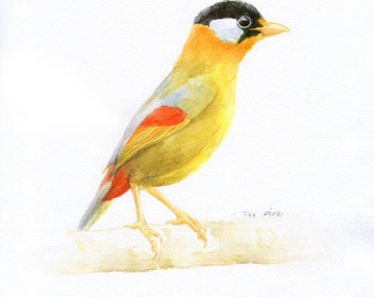 "Original watercolor painting, bird painting handmade, 8""x10"" animal watercolor wall art"