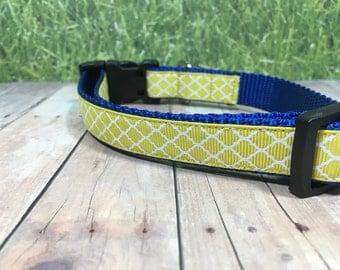 "The Duke | Designer 3/4"" Width Dog Collar | CupcakePups Collars | Yellow and Blue - Small/Medium Dog Collar"