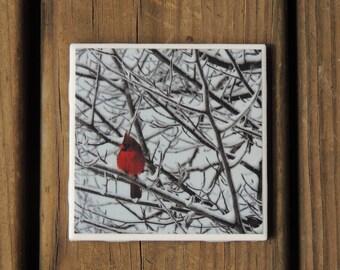 Cardinal in snow photo coaster, cardinal photo, bird lover, remembrance bird, mini art, home decor, Cardinal, snowy tree, winter scene