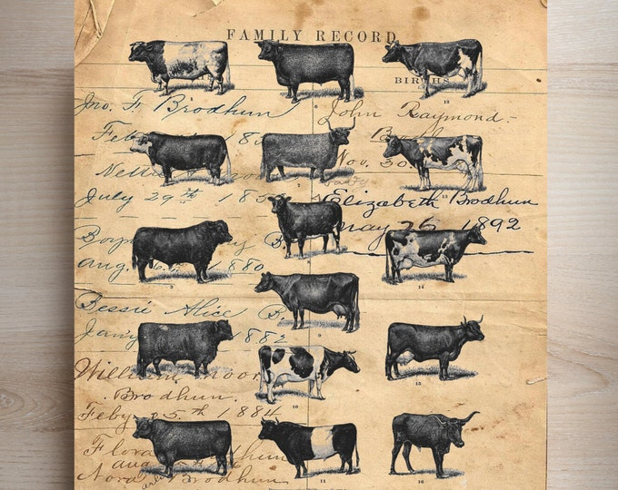 FARMHOUSE decor  cow study vintage rustic farm art print custom choice background from antique paper CSV3567