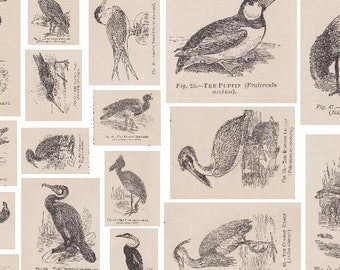 4 Victorian Birds Collage Printable PDF A4 Sheets - Vintage Decoupage Paper, Scrapbooking/Paper Craft/Mixed Media/Card Making