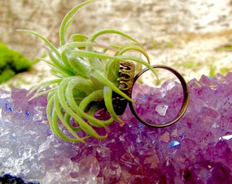 Air Plant Ring! Living Plant Jewelry: Literally Blooming with Love! Free Gift Wrapping