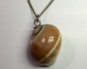 Vintage Sea Shell Necklace, Moonsnail Sea Shell, Vintage 1970s Necklace