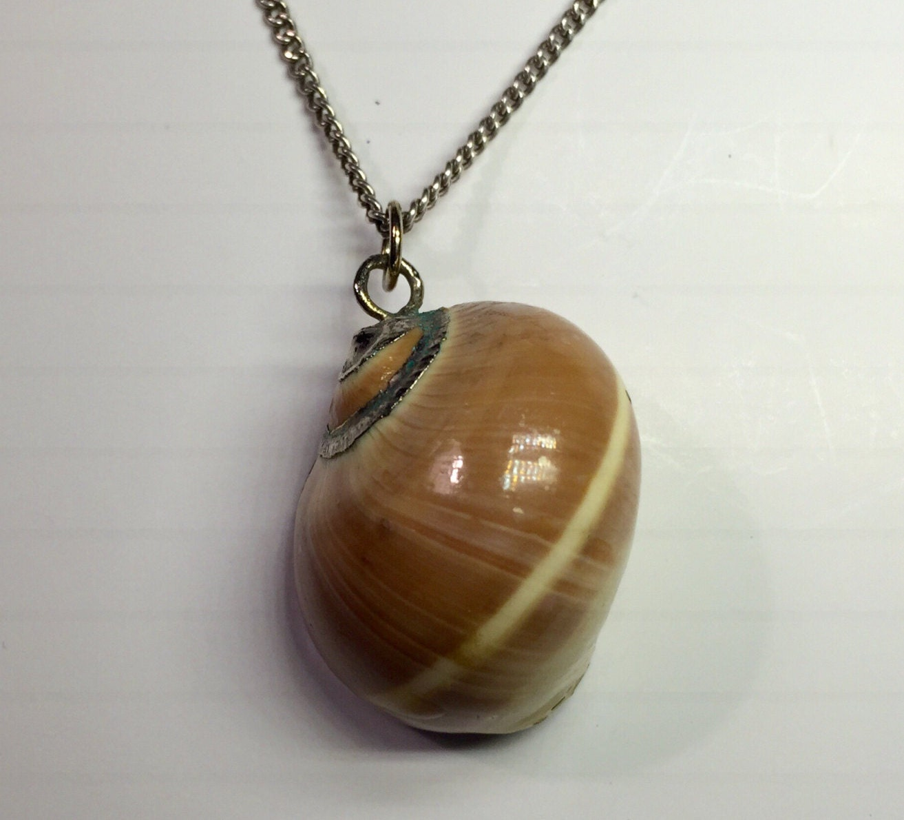 Make Your Own Seashell Jewelry: Vintage Sea Shell Necklace Moonsnail Sea By BarnabyGlenVintage