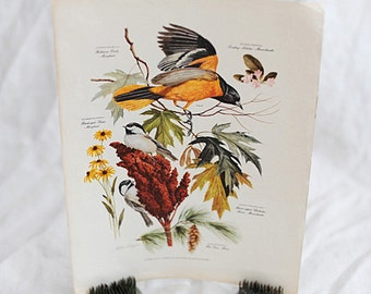 Botanical Bird Print