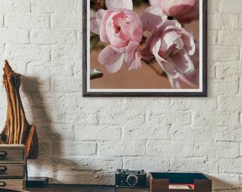 roses, pink flowers, gardens, natural art, nature photography, flower photography, massachusetts, new england photography, fine art print