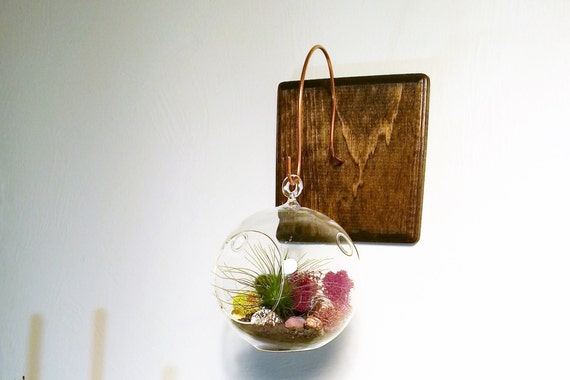 Wall mount for hanging terrarium handmade by for Air plant holder ideas