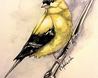 Gold Finch Water color