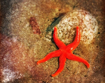 Starfish Photography, Beach Photography, Sea Star, Nature Photography, Fine Art Photography, Starfish Photo, Beach Scene, Starfish