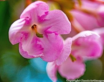 Flower Digital Download Photography Pink Instant Download Macro Photography Fine Art Photography Digital Wall Art Flower Photograph