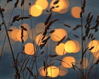 golden grass, sunset light, nature photography, earth tones, botanical art print, nature home decor, fine art photography, 8x10, summers eve