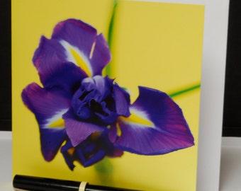 Iris, Greeting Card - 150mm square