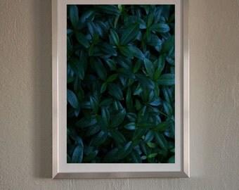 Dark Green Leafs Art,Modern Abstract Print,Photography Wall Art,Plants Photo,Minimalist Leafs,Landscape,Printable Large Poster,Deep Green