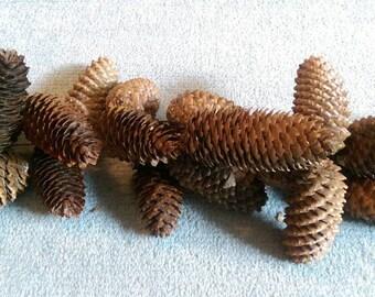 Christmas pine cone garland 2 metres in length