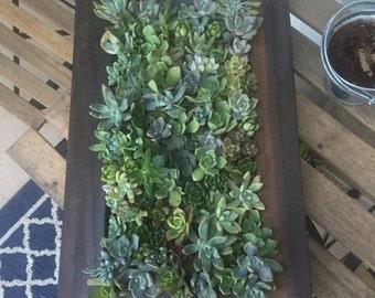 Living Succulent Wall Art