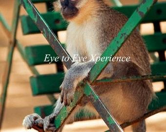 Monkeybuisyness