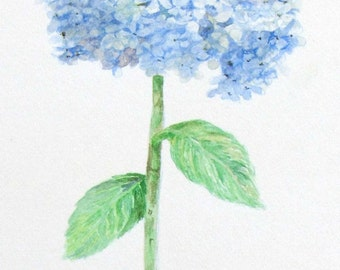 Blue Hydrangea Water Colorwater Painting