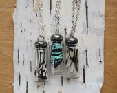 Green Sunset Moth Wing in a bottle, Real Wing Jewelry, Butterfly Necklace, long chain, curiosity