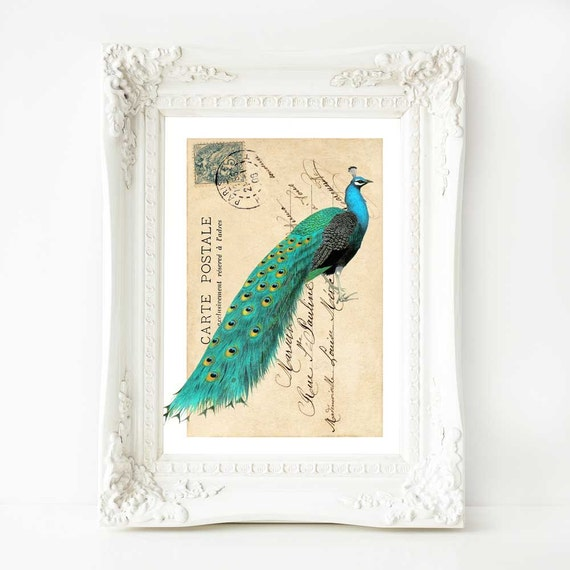Peacock print, vintage peacock illustration, vintage home decor, French vintage decor, blue and green, peacock art, peacock decor, A4 print