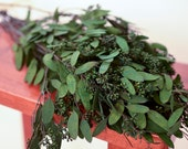 Bunch of Forest Green Seeded Eucalyptus, dark green seeded eucalyptus, green eucalyptus, dark greenery, seeded eucalyptus