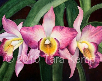 Orchid Trio - Archival botanical signed print in a 11x14 mat, from original painting by Tara Kemp