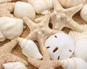 Seashells Cake Topper Sugar Paste Realistic in Natural Ivory- Set of 16
