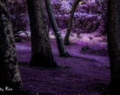 Dark Purple Trees Deep in the Forest Horror Print Dark Print Various Sizes Macabre Fantasy Another World 6x4 7x5 8x10