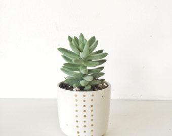 planter Terrarium garden home decor Handmade ceramic planter garden in white and gold succulent pot
