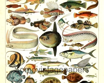 "Fishes dictionnary page digital files antique french encyclopedia 9x12"" instant download"
