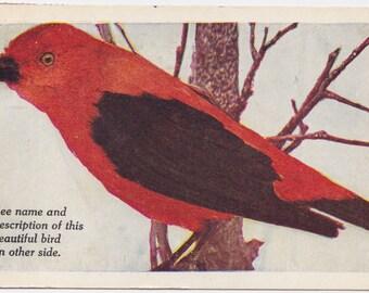 """Signed. Vintage US Postcard """"Scarlet Tanager"""" -- mailed in 1955"""