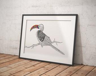 Hornbill illustration | Print | african animal | pattern illustration | bird illustration