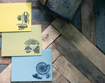 Letterpress Insect Stationery Note Cards - 9 flat cards