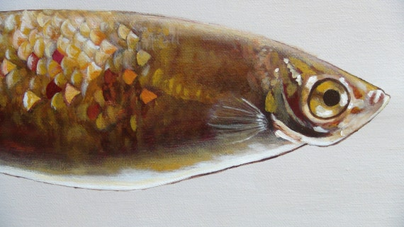 Big eye fish painting print in golden reds browns for Fish eyes in paint