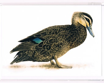 Pacific Black Duck Watercolour Greeting Card