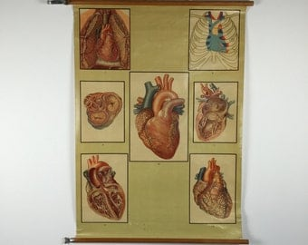 Vintage anatomy pull down chart: the heart