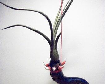 cobalt blue horn air plant terrarium with spikes and tentacle 6 x 3 x 2