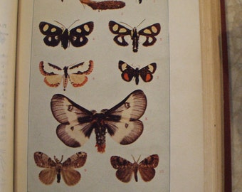 "Antique HC Colorful ""Insect Life"" by John H. Comstock with Color Plates - 1919"
