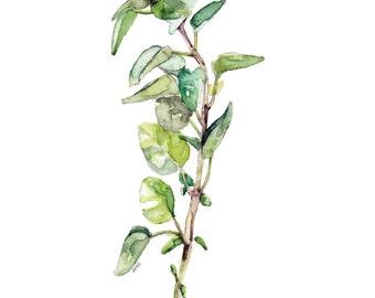 "Oregano Herb Painting - Print from Original Watercolor Painting, ""Oregano"", Kitchen Decor, Green Herb, Botanical"