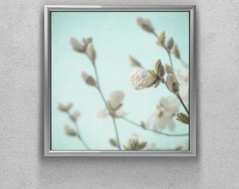 Fine Art Photography - White Magnolia Buds - Nature Photo Print - Dreamy Picture of Flowers - Nursery Art - Romantic Aqua Bedroom Decor