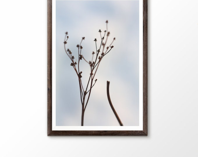 Instant download photography Photography wall Minimalist prints Floral Macro Dry plants Stalk of grass Grass field Meadow grass Early spring