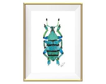 Aqua Beetle Watercolor Art Print - Beautiful Home Decoration