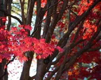 Fall Foliage, Virginia, USA #81