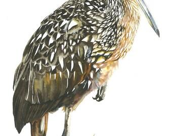 ORIGINAL Watercolor Bird Painting / Limpkin