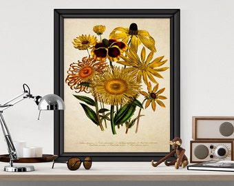 Botanical Art Print Sunflowers Giclee Home Decor Antique Natural History Art Yellow Flower Decor Reproduction FL022