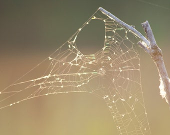 Spider Web Photo Print. Humble Abode (Spiderweb Photography, Spider Silk, Orb Web, Circular Web, Glowing Light, Golden Hour, Spring Warmth)