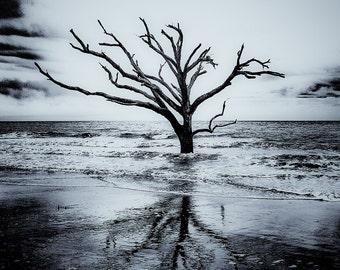 BOTANY BAY TREE edisto beach south carolina ocean reclaimed